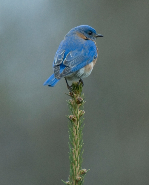 The Bluebirds love this perch