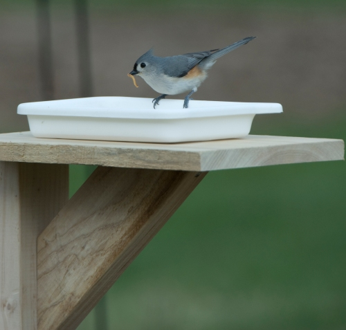 A titmouse was the second to explore the feeder