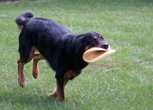 The Folded Frisbee Retrieve