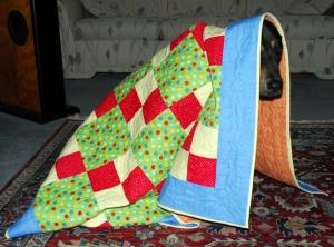 Nina Hides Under Comfort Quilt