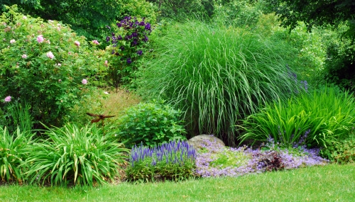 blue in perennial garden