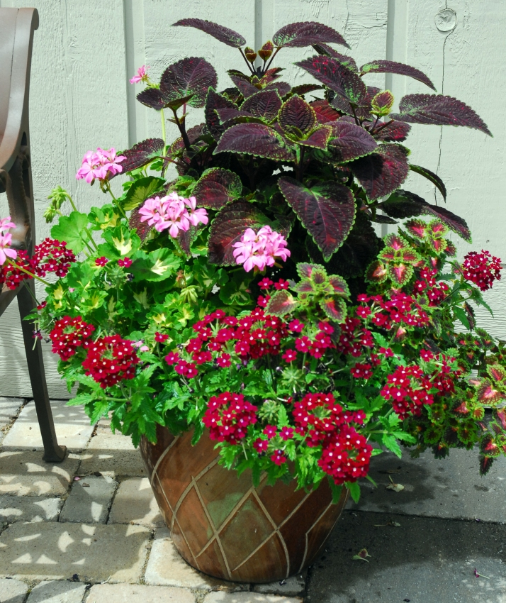 """SoundEagle says: This post presents an update on the extra lush growth  observable on the same but younger potted plants shown in the post entitled  """" ... - Patio Potted Plant Society"""