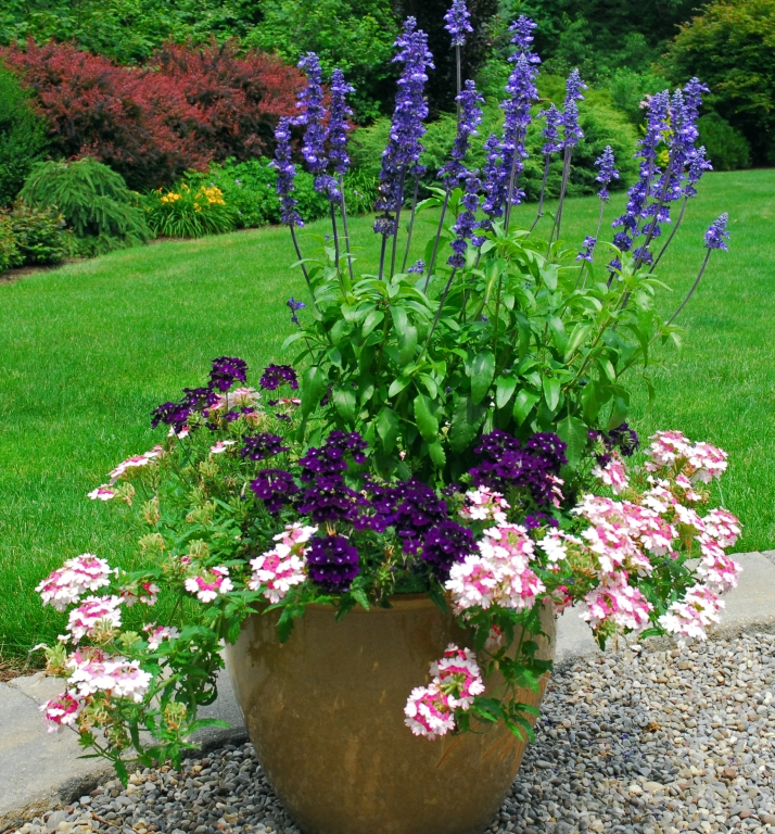 patio potted plant society
