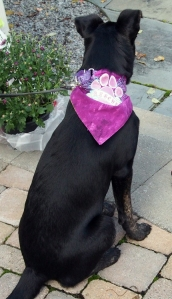 Millie with rescue bandana