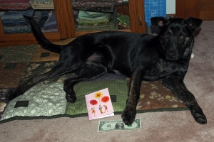 Millie - Card and Dollar from Lily