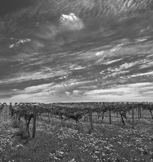 penfield vineyard