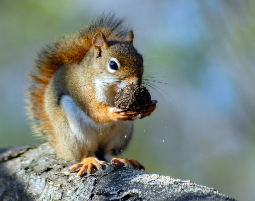 unique how to hunt squirrels in your backyard architecture nice