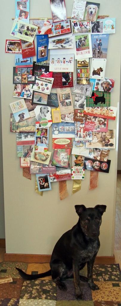 Millie - Christmas Cards 2012