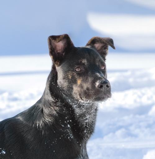 Millie_beauty in snow