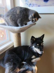 mystic-sage-in-cat-tree