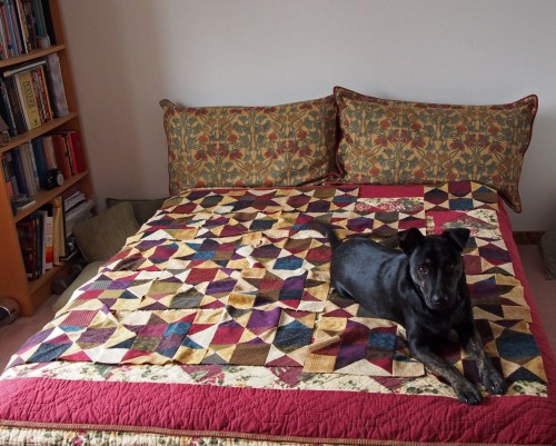flannel quilt - millie holding down the quilt blocks