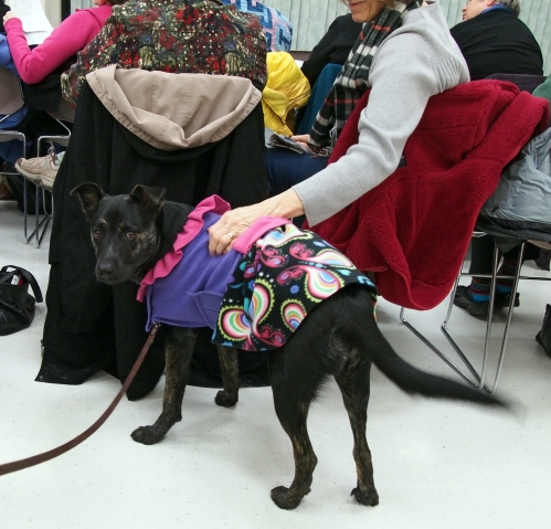 Millie - PQG visit - getting pets