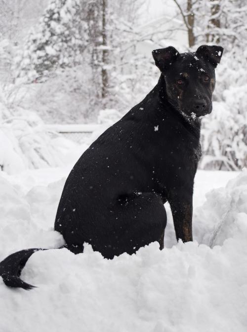 Millie - sitting on snow pile