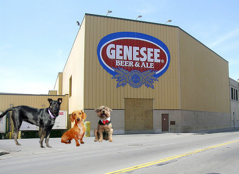 pip tour - genesee brewery - outside