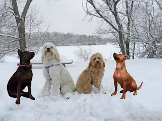 Valentines Ball - snow play date