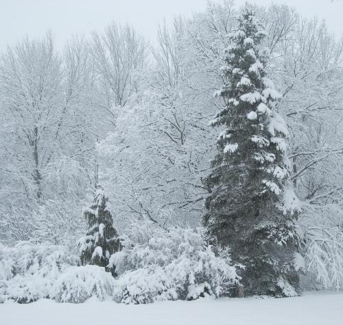 snowstorm1