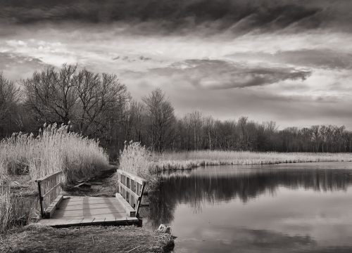 Beaver Pond Bridge - BW