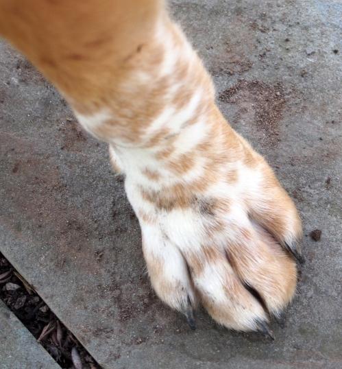 walter - spotty paw