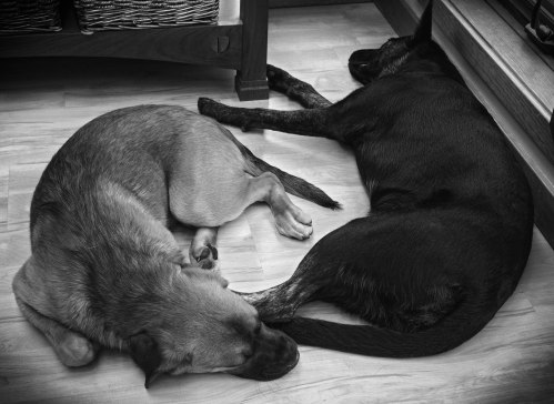 millie and walter - yin yang - bw - vignette