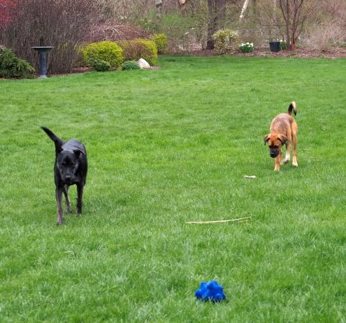 millie walter - walking around yard