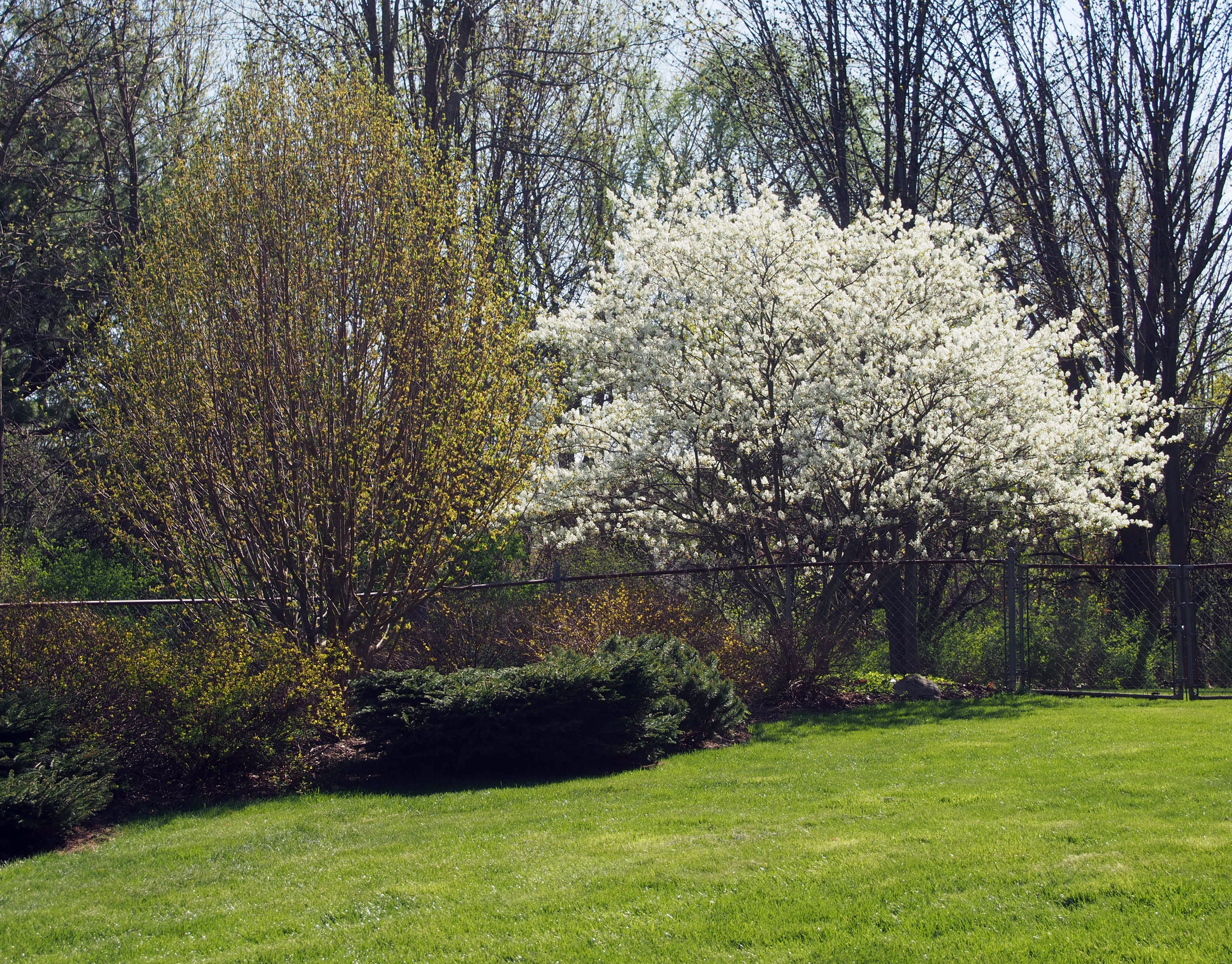 This moment see beautiful flowers on friday bird for Serviceberry tree
