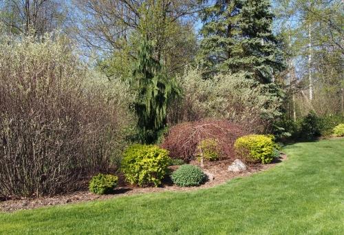 yard shot - cypress - yellow barberie