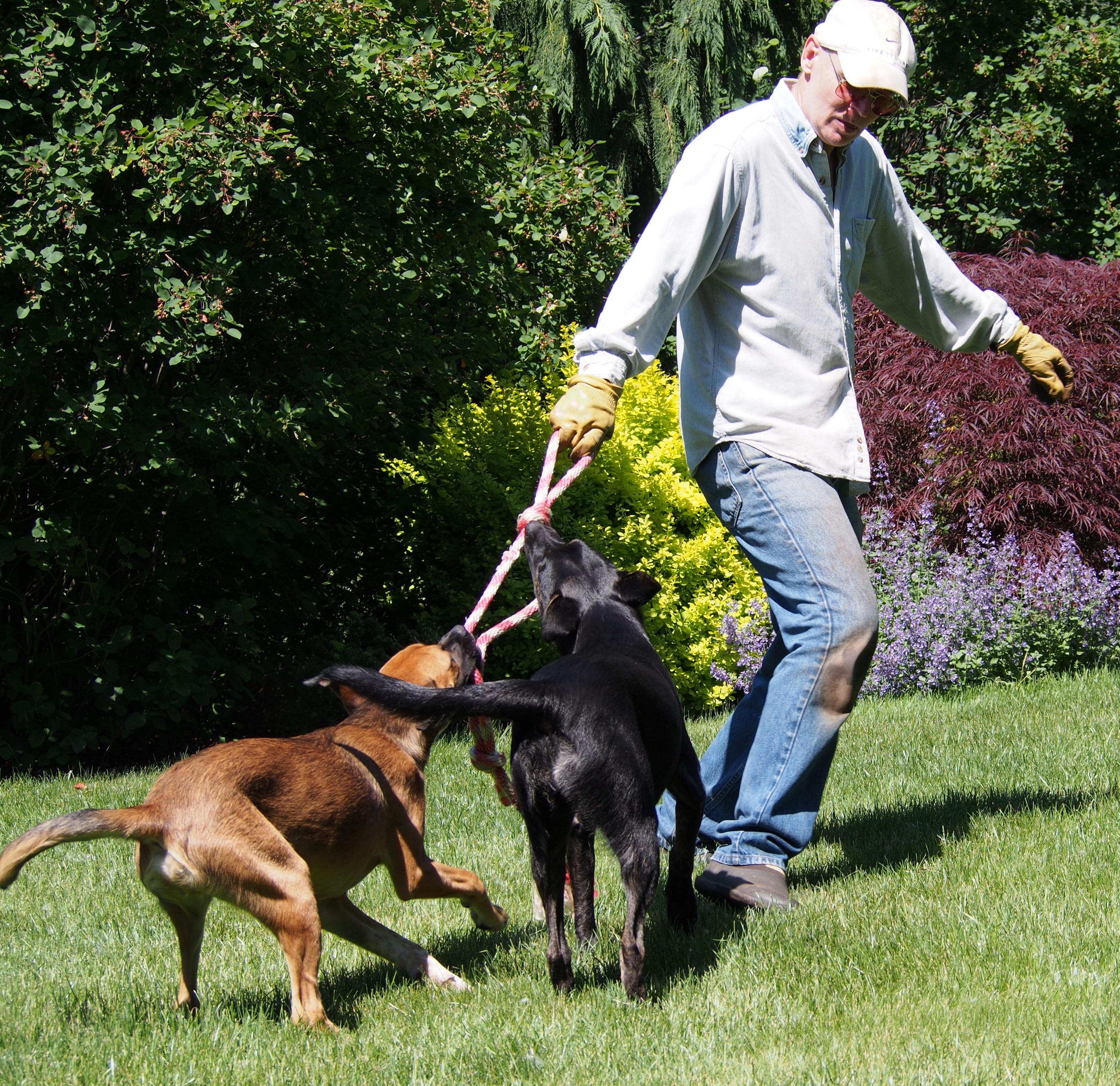 how to walk the dog fishing