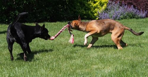 Millie Walter - rope play 1