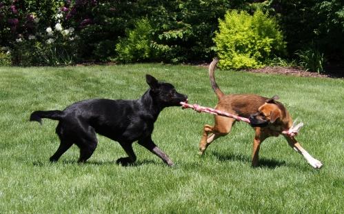 Millie Walter - rope play 2
