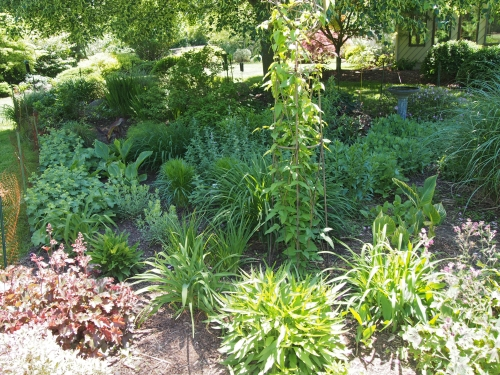 Clemetis and other perennials