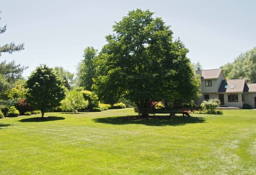 Taken from North East Corner -  Katsura Tree in Center