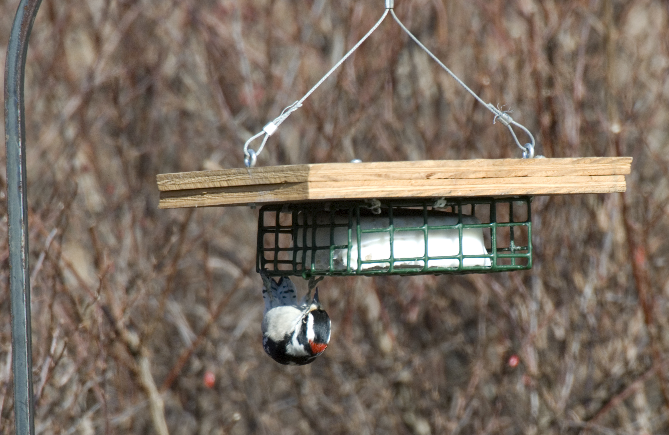 suet feeder bird brains dog tales