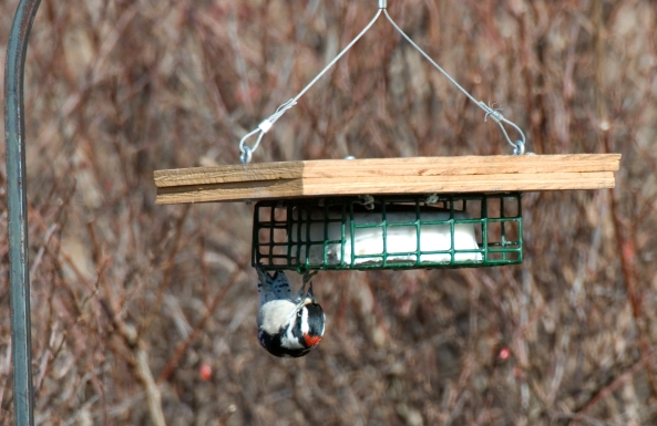 Diy Suet Feeder Plans Download Cabinet Door Spice Rack