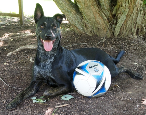 Millie - Smiling with Soccer ball