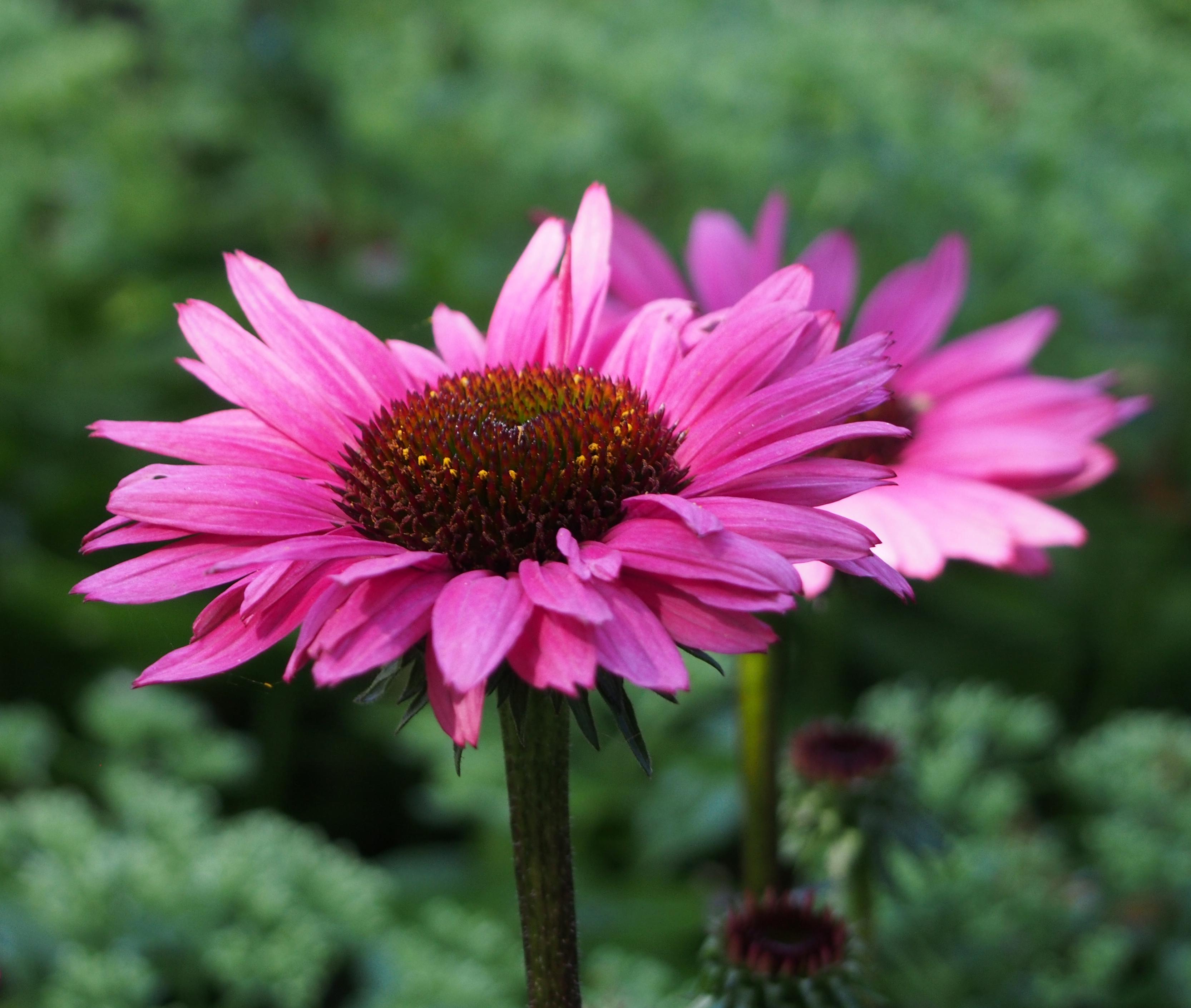Flowers: Bird Brains & Dog Tales