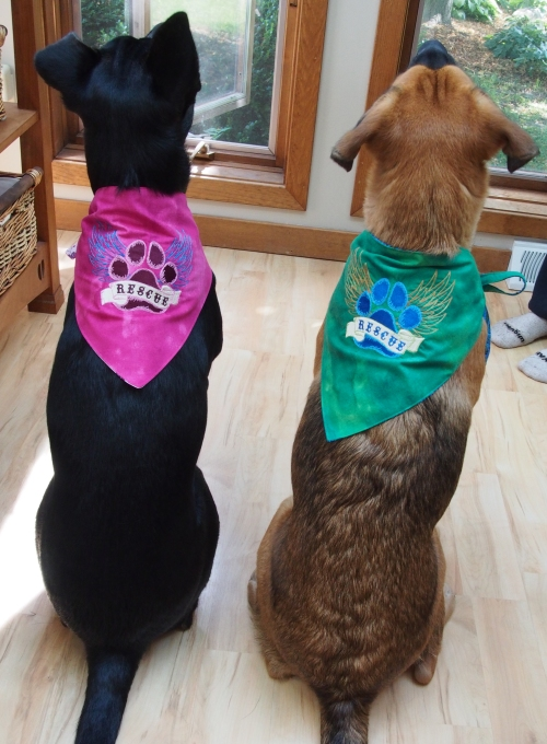 Rescue Bandannas - Millie and Walter model