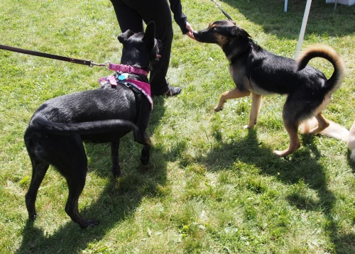 Millie meeting one of the adoptable dogs