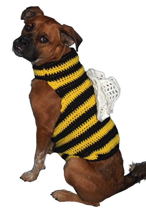 Don't I make a cute bee?