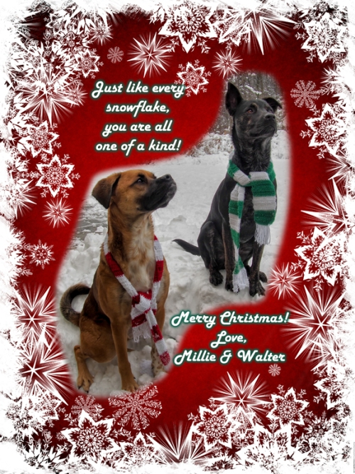 2013 Christmas card - Millie and Walter - Sm