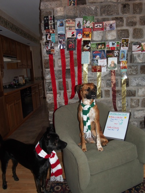 What is that white board for? I think it helps mom keep track of how few cards our pawrents have. A big fat ZERO! BOL!