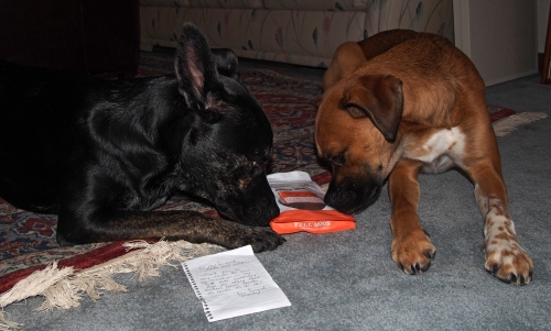 The heck with the note Millie. Check out these treats! Ooooh you are right Walter these smell great!