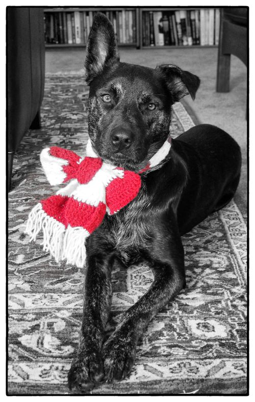 Millie - with scarf - portrait - bw