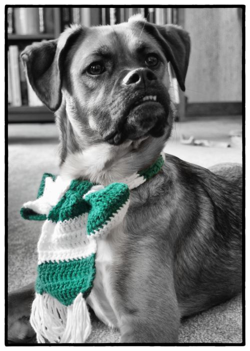 Walter - scarf - portrait - bw
