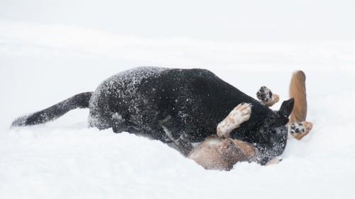 snow wrestling3 - lr
