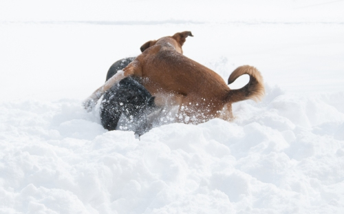 snow wrestling6 - lr