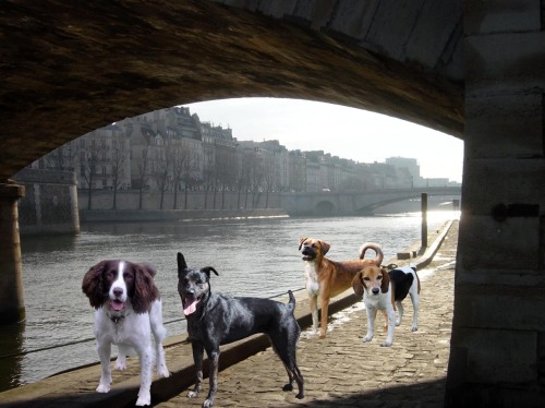 Enjoying a leisurely walk along the river Seine.