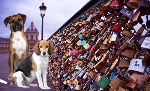 "Walter and Tui put a ""love lock"" on the bridge."