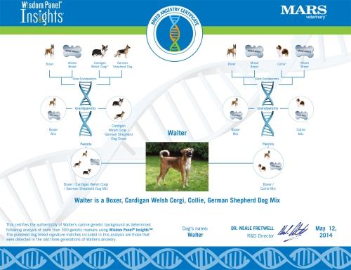 Walter's DNA Certificate
