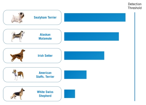Mixed Breed Ancestry of Millie's DNA Certificate