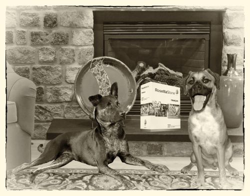 Walter Millie - in front of fireplace with Rosetta Stone Software